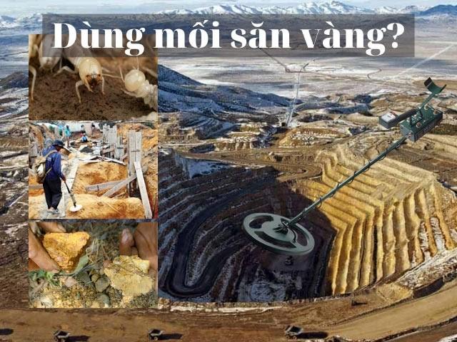 Các nghiên cứu chỉ ra, trong thành phần tổ mối càng gần quặng vàng, nồng độ chứa vàng càng lớn.